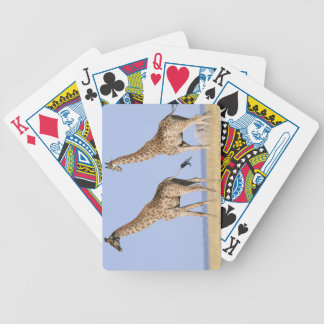 Etosha National Park, Namibia Bicycle Playing Cards
