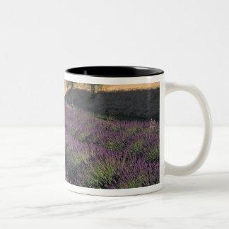 EU, France, Provence, Lavender fields 3 Mugs