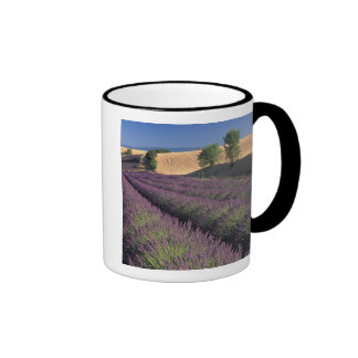 EU, France, Provence, Lavender fields 3 Coffee Mugs