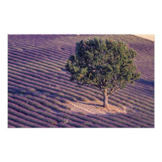 EU France Provence Lavender fields 3 Art Photo