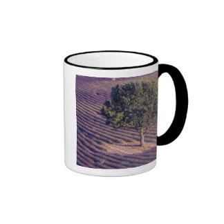 EU, France, Provence, Lavender fields Coffee Mug