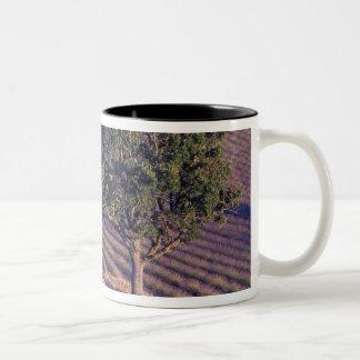 EU, France, Provence, Lavender fields Mugs