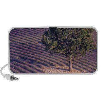 EU France Provence Lavender fields iPhone Speaker