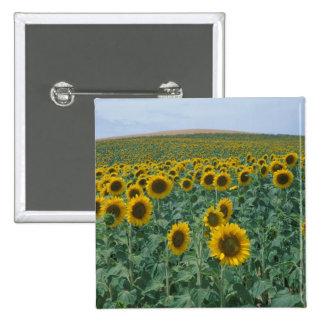 EU, France, Provence, Sunflower field 15 Cm Square Badge