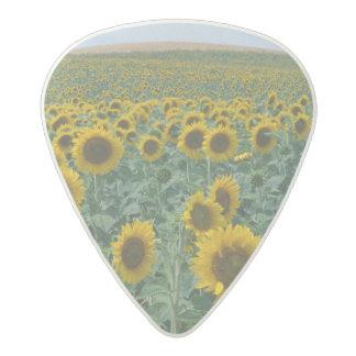 EU, France, Provence, Sunflower field Acetal Guitar Pick