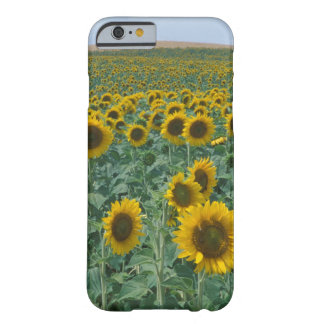 EU, France, Provence, Sunflower field Barely There iPhone 6 Case