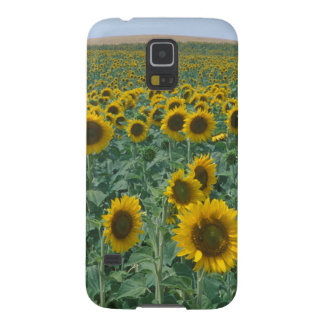 EU, France, Provence, Sunflower field Case For Galaxy S5