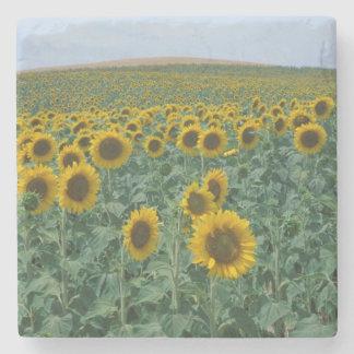 EU France Provence Sunflower field Stone Coaster