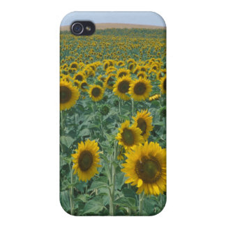 EU, France, Provence, Sunflower field iPhone 4/4S Cases