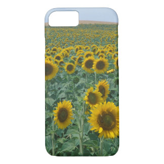 EU, France, Provence, Sunflower field iPhone 8/7 Case