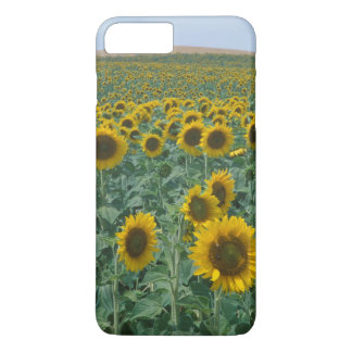 EU, France, Provence, Sunflower field iPhone 8 Plus/7 Plus Case