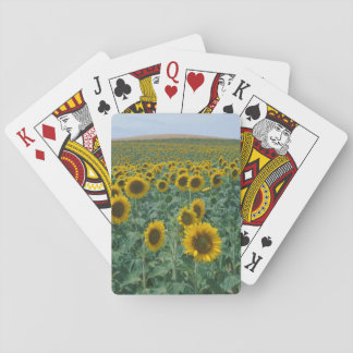EU France Provence Sunflower field Playing Cards