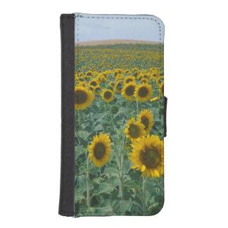 EU, France, Provence, Sunflower field Phone Wallet