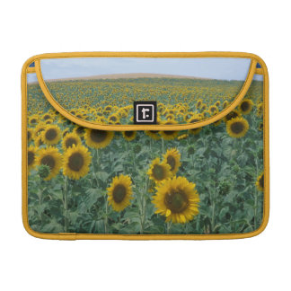 EU, France, Provence, Sunflower field Sleeves For MacBook Pro