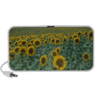 EU France Provence Sunflower field Travelling Speakers