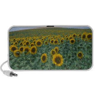 EU, France, Provence, Sunflower field Travelling Speaker