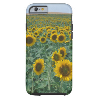 EU, France, Provence, Sunflower field Tough iPhone 6 Case