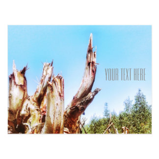 Eucalyptus Tree Stump Blue Sky Postcard