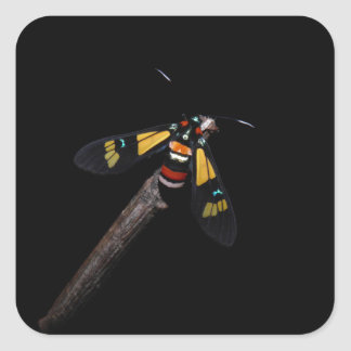 Euchromia foletti collectible moth sticker