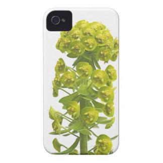 Euphorbia Case-Mate iPhone 4 Cases