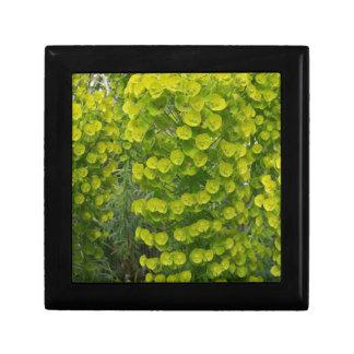Euphorbia characias wulfenii small square gift box