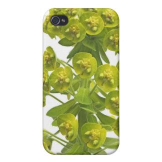 Euphorbia iPhone 4 Cover