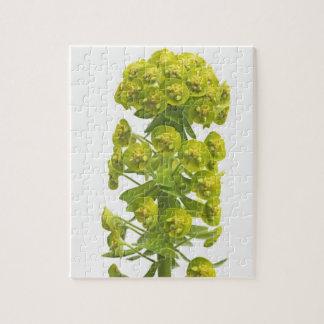 Euphorbia Jigsaw Puzzle
