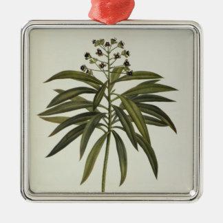 Euphorbia Mellifera Christmas Ornament