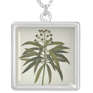 Euphorbia Mellifera Silver Plated Necklace