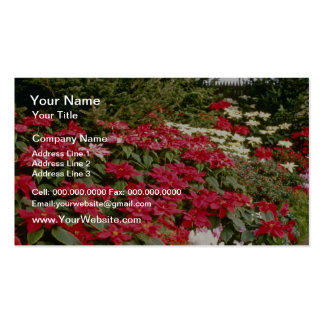 Euphorbia Pulcherrima (Poinsettia) flowers Business Card Template