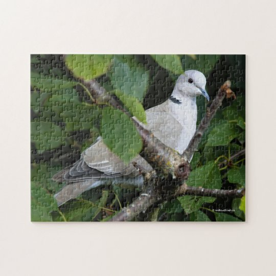 Eurasian Collared Dove on the Cherry Tree Jigsaw