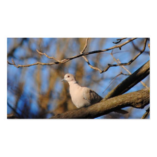 Eurasian Collared Dove Pack Of Standard Business Cards