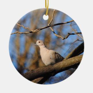 Eurasian Collared Dove Round Ceramic Decoration