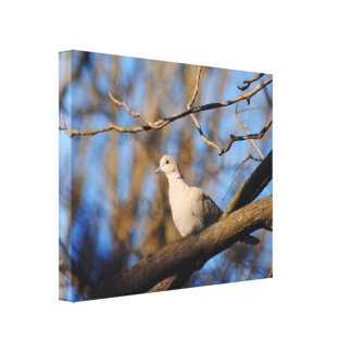 Eurasian Collared Dove Stretched Canvas Print