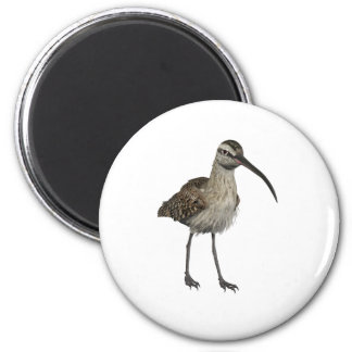 Eurasian Curlew Magnets