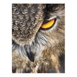 Eurasian Eagle Owl (Bubo bubo) Postcard