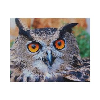 Eurasian Eagle Owl Stretched Canvas Prints