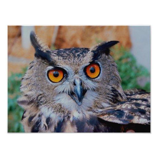 Eurasian Eagle Owl Photo Print