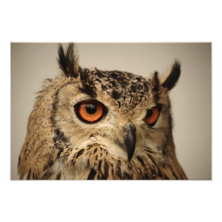 Eurasian Eagle Owl Portrait Photo Print