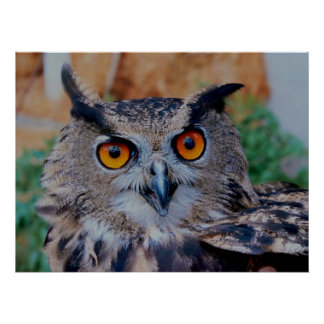 Eurasian Eagle Owl Posters