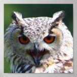 Eurasian Eagle-owl Posters
