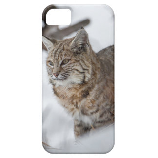 Eurasian Lynx hunting in snow iPhone 5 Cover