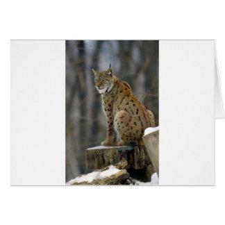 Eurasian Lynx (Lynx lynx) 3 Greeting Card