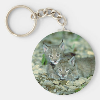 Eurasian lynx young kittens playing key chain