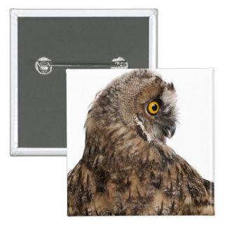 Eurasian Scops-owl - Otus scops (2 months old) 15 Cm Square Badge