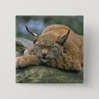 Europ�_ischer Luchs, Eurasischer Luchs (Lynx 15 Cm Square Badge