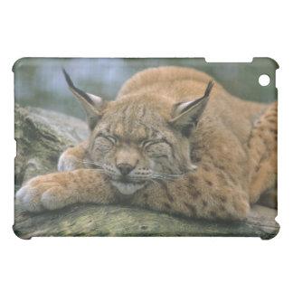 Europ�_ischer Luchs, Eurasischer Luchs (Lynx iPad Mini Case