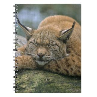 Europ�_ischer Luchs, Eurasischer Luchs (Lynx Notebooks
