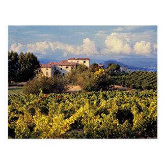 Europe, France, Bonnieux. Vineyards cover the Postcard