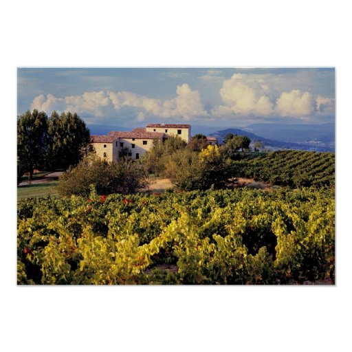 Europe, France, Bonnieux. Vineyards cover the Print